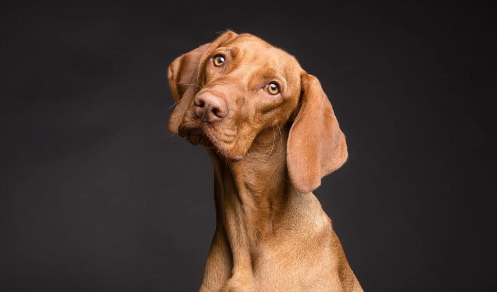 Original Dog Name Ideas You Won't Find Anywhere Else