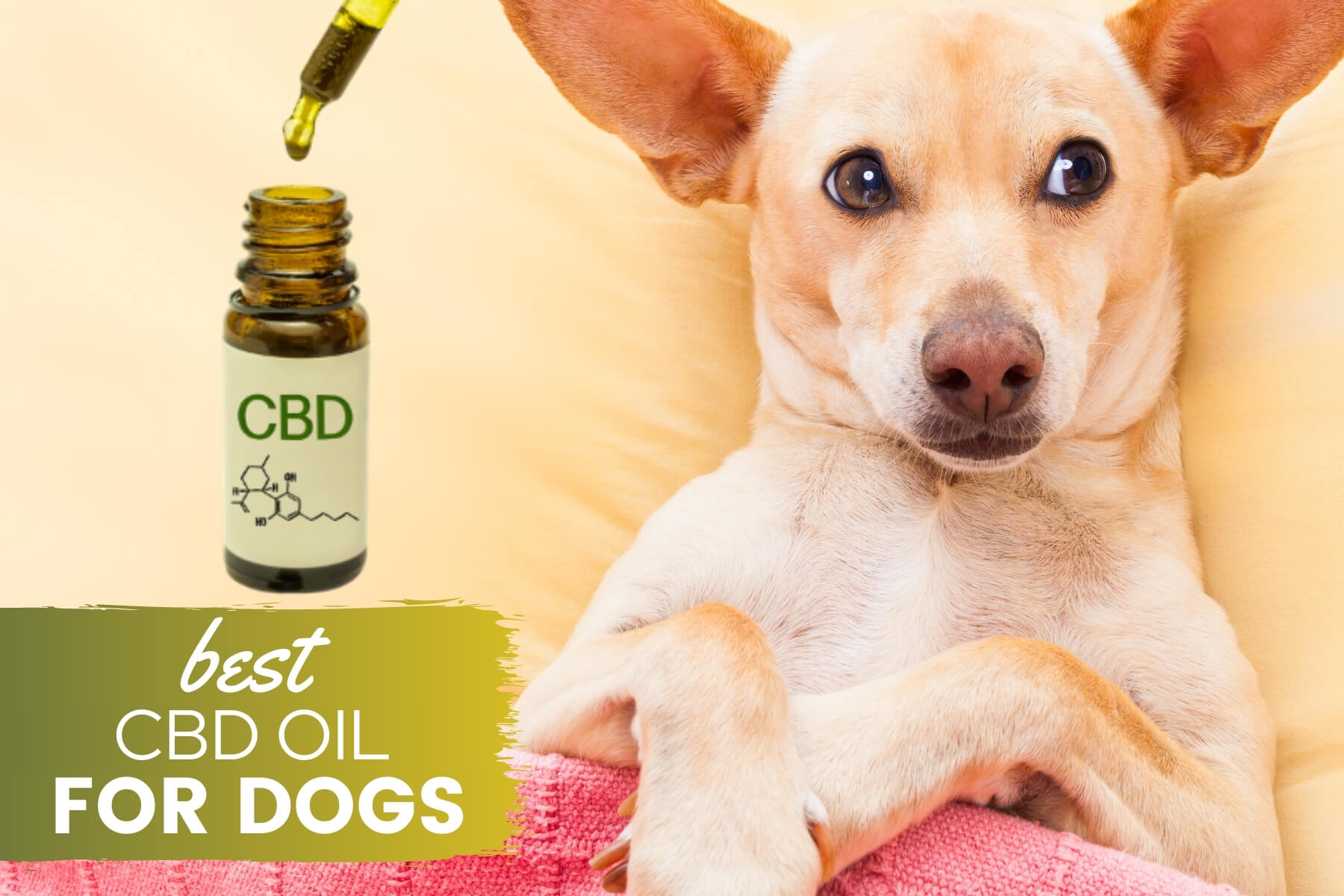 Best CBD Oil For Dogs: A Cure For Arthritis, Anxiety, Pain & More? (Reviews  & Guide) - Canine Bible