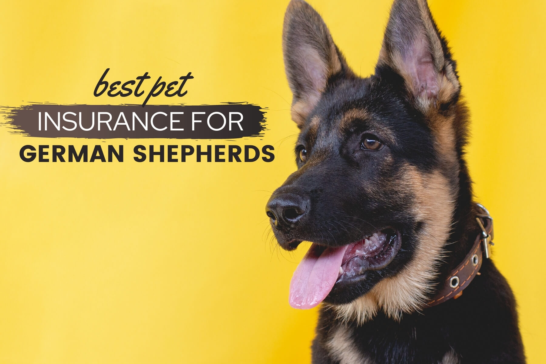 Best Pet Insurance For German Shepherds Do Gsds Need It Canine Bible
