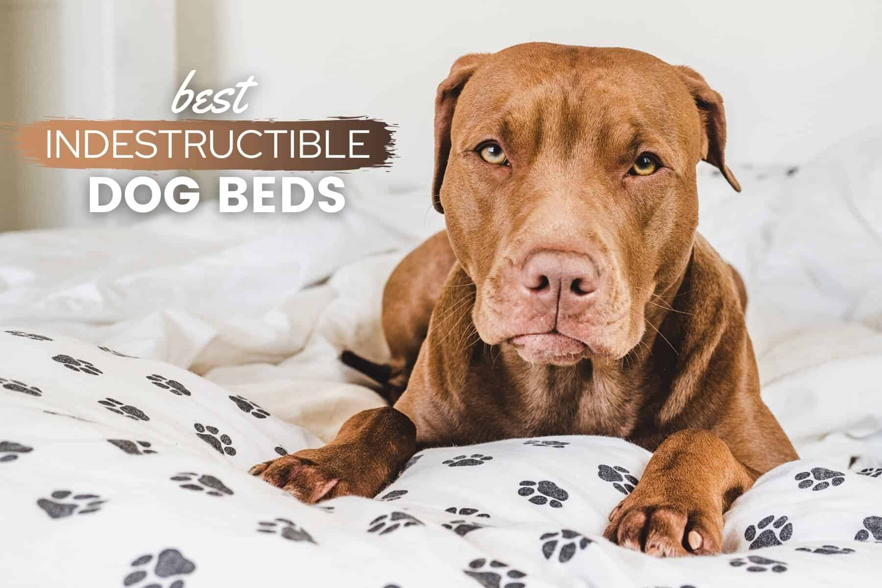 Best Indestructible Dog Beds Durable Chew Proof Tough Heavy Chewer Approved Canine Bible